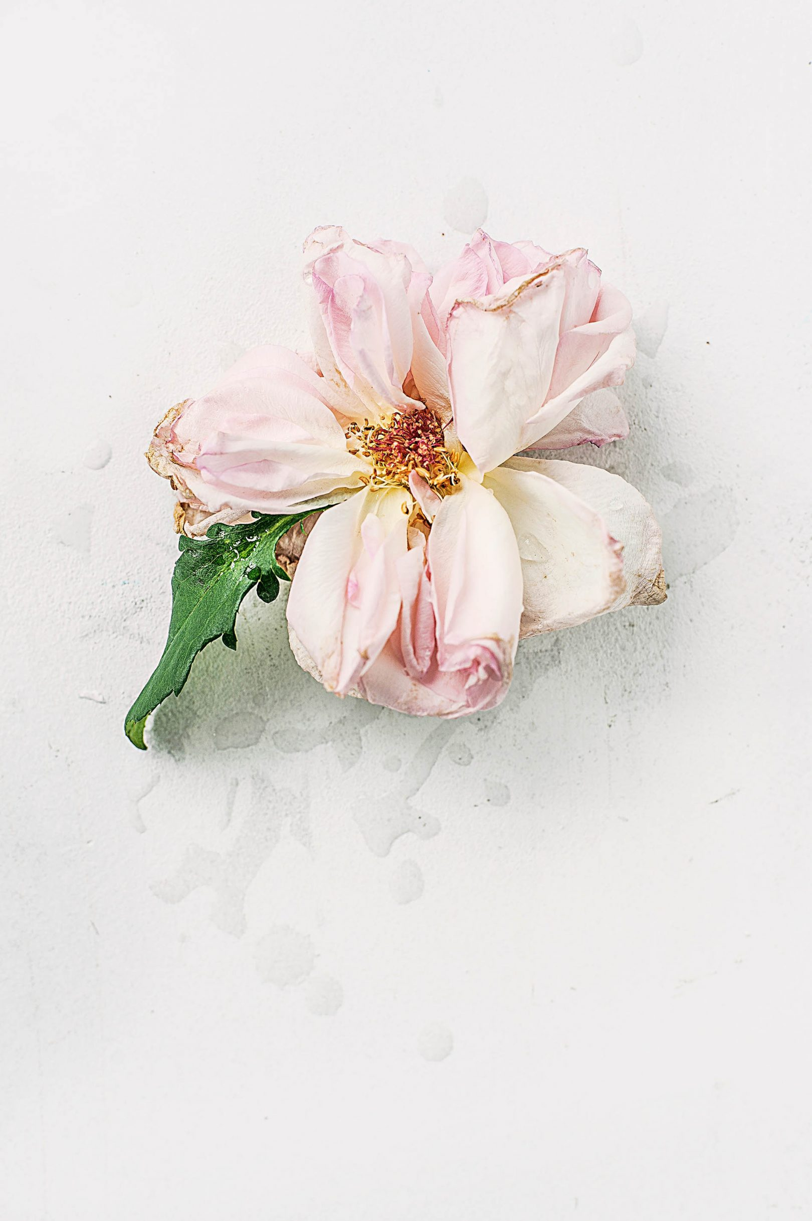 bloom-blossom-dried-1077620